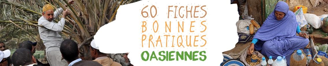 RADDO Accéder à la collection complète des 60 fiches bonnes pratiques oasiennes